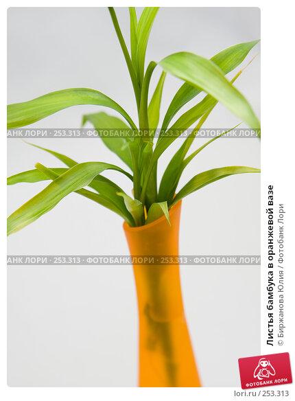 Купить «Листья бамбука в оранжевой вазе», фото № 253313, снято 15 апреля 2008 г. (c) Биржанова Юлия / Фотобанк Лори