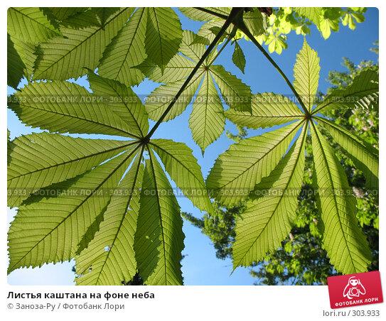 Купить «Листья каштана на фоне неба», фото № 303933, снято 24 мая 2008 г. (c) Заноза-Ру / Фотобанк Лори