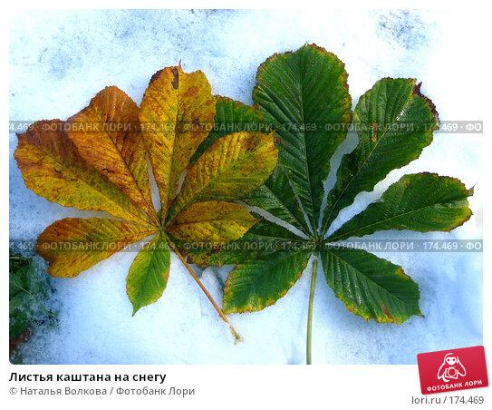 Листья каштана на снегу, фото № 174469, снято 17 октября 2007 г. (c) Наталья Волкова / Фотобанк Лори