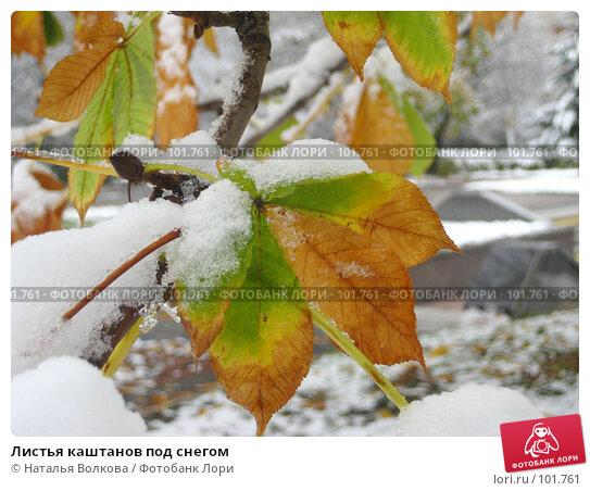 Купить «Листья каштанов под снегом», фото № 101761, снято 16 октября 2007 г. (c) Наталья Волкова / Фотобанк Лори