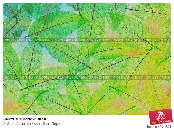 Листья. Коллаж. Фон., фото № 201821, снято 14 февраля 2008 г. (c) Иван Сазыкин / Фотобанк Лори