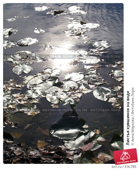 Листья кувшинок на воде, фото № 316785, снято 20 февраля 2017 г. (c) Анна Маркова / Фотобанк Лори