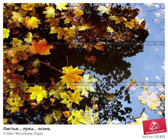 Купить «Листья... лужа... осень», фото № 29433, снято 20 ноября 2017 г. (c) DIA / Фотобанк Лори