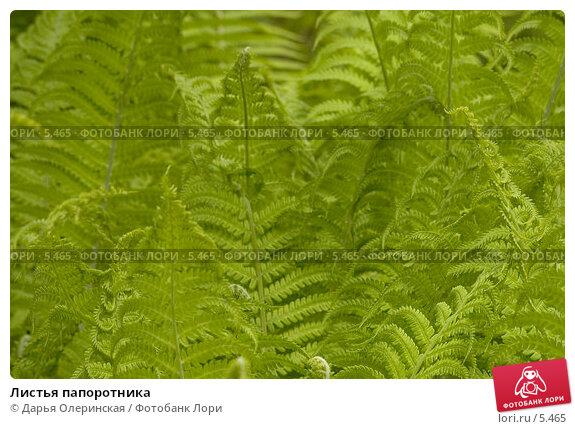 Листья папоротника, фото № 5465, снято 3 июня 2006 г. (c) Дарья Олеринская / Фотобанк Лори