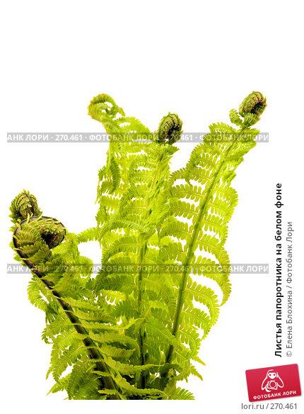 Купить «Листья папоротника на белом фоне», фото № 270461, снято 3 мая 2008 г. (c) Елена Блохина / Фотобанк Лори