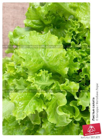 Листья салата, фото № 307877, снято 31 мая 2008 г. (c) Goruppa / Фотобанк Лори