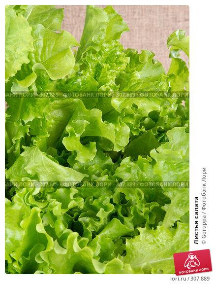 Листья салата, фото № 307889, снято 31 мая 2008 г. (c) Goruppa / Фотобанк Лори