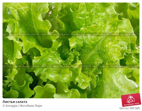 Листья салата, фото № 307925, снято 31 мая 2008 г. (c) Goruppa / Фотобанк Лори
