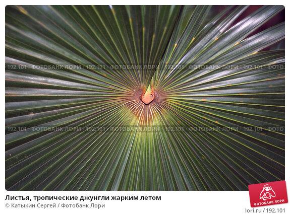 Листья, тропические джунгли жарким летом, фото № 192101, снято 5 января 2008 г. (c) Катыкин Сергей / Фотобанк Лори