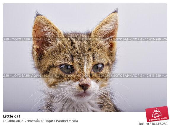 Little cat. Стоковое фото, фотограф Fabio Alcini / PantherMedia / Фотобанк Лори