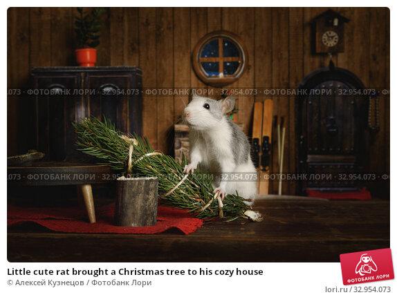 Little cute rat brought a Christmas tree to his cozy house. Стоковое фото, фотограф Алексей Кузнецов / Фотобанк Лори