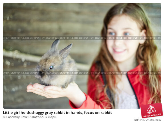Купить «Little girl holds shaggy gray rabbit in hands, focus on rabbit», фото № 25840037, снято 30 мая 2015 г. (c) Losevsky Pavel / Фотобанк Лори