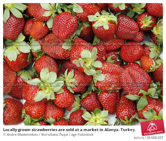 Locally grown strawberries are sold at a market in Alanya. Turkey. Стоковое фото, фотограф Andre Maslennikov / age Fotostock / Фотобанк Лори