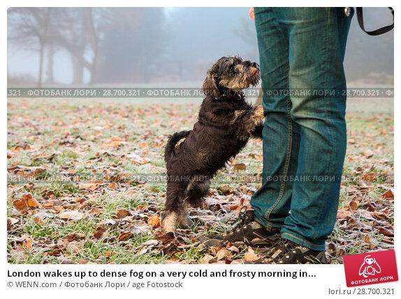 Купить «London wakes up to dense fog on a very cold and frosty morning in Finsbury Park, north London. Where: London, United Kingdom When: 28 Dec 2016 Credit: WENN.com», фото № 28700321, снято 28 декабря 2016 г. (c) age Fotostock / Фотобанк Лори