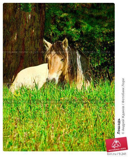 Лошадь, фото № 9241, снято 30 марта 2017 г. (c) Андрей Жданов / Фотобанк Лори