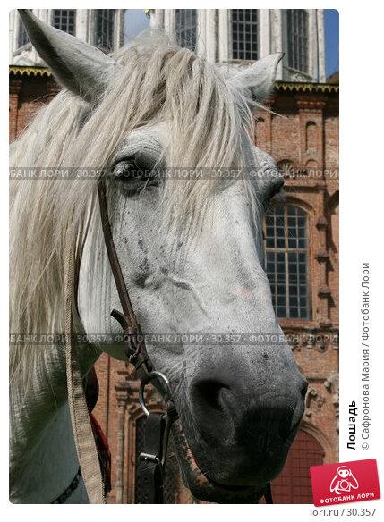 Лошадь, фото № 30357, снято 16 июля 2005 г. (c) Сафронова Мария / Фотобанк Лори