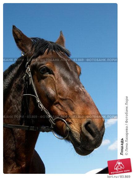 Лошадь, фото № 83869, снято 6 июля 2007 г. (c) Лена Лазарева / Фотобанк Лори