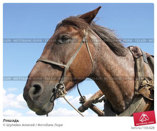 Лошадь, фото № 133629, снято 1 июля 2006 г. (c) Шупейко Алексей / Фотобанк Лори