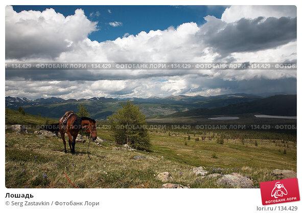 Лошадь, фото № 134429, снято 30 июня 2006 г. (c) Serg Zastavkin / Фотобанк Лори