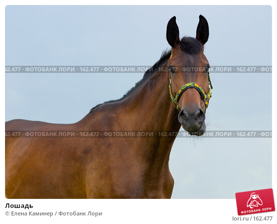 Купить «Лошадь», фото № 162477, снято 1 июля 2007 г. (c) Елена Каминер / Фотобанк Лори