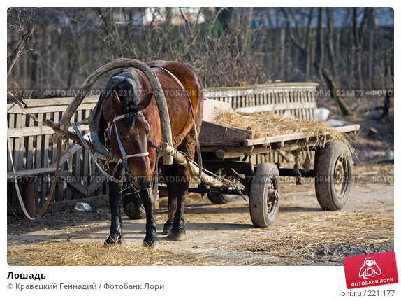 Лошадь, фото № 221177, снято 25 марта 2006 г. (c) Кравецкий Геннадий / Фотобанк Лори