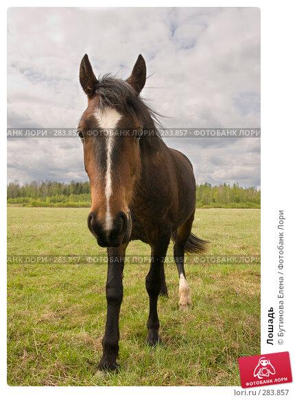Лошадь, фото № 283857, снято 10 мая 2008 г. (c) Бутинова Елена / Фотобанк Лори