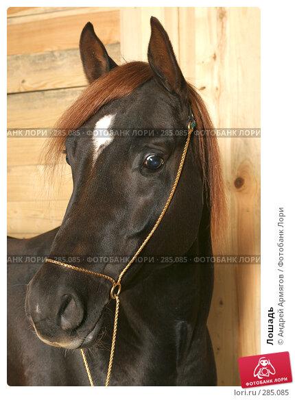 Лошадь, фото № 285085, снято 24 марта 2006 г. (c) Андрей Армягов / Фотобанк Лори