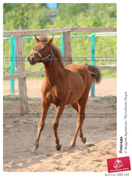 Лошадь, фото № 285141, снято 8 июля 2006 г. (c) Андрей Армягов / Фотобанк Лори