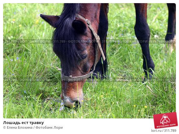 Лошадь ест травку, фото № 311789, снято 29 мая 2008 г. (c) Елена Блохина / Фотобанк Лори