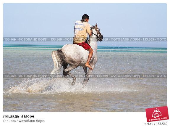 Лошадь и море, фото № 133569, снято 16 сентября 2007 г. (c) hunta / Фотобанк Лори