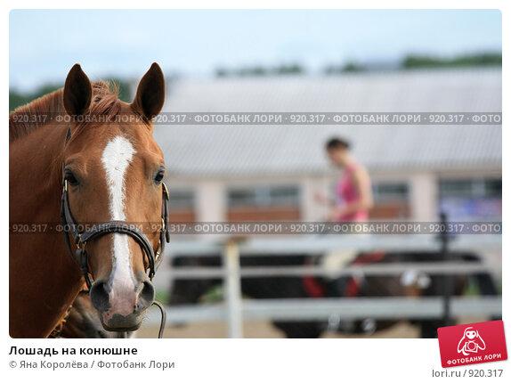 Купить «Лошадь на конюшне», фото № 920317, снято 14 июня 2009 г. (c) Яна Королёва / Фотобанк Лори