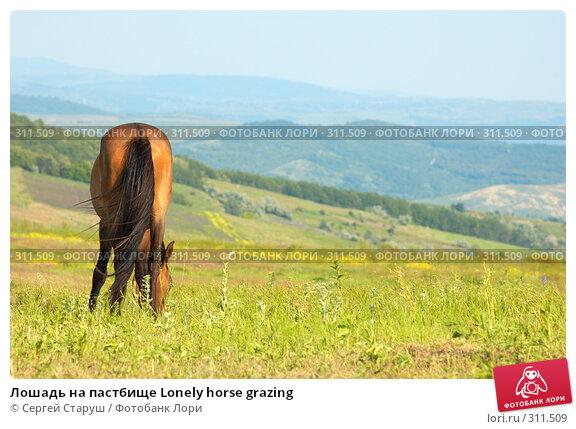 Лошадь на пастбище Lonely horse grazing, фото № 311509, снято 4 июня 2008 г. (c) Сергей Старуш / Фотобанк Лори