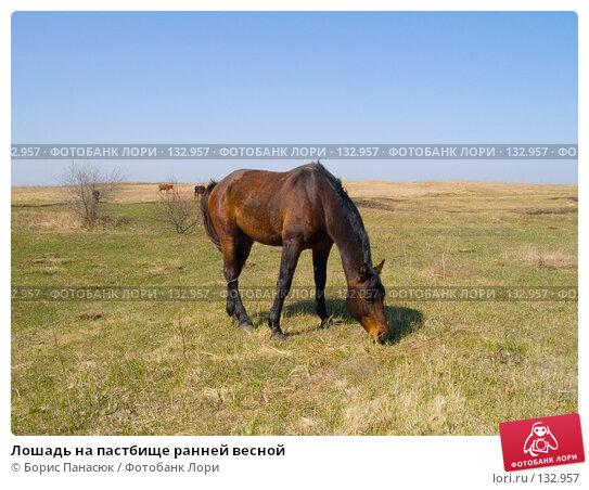 Лошадь на пастбище ранней весной, фото № 132957, снято 10 апреля 2005 г. (c) Борис Панасюк / Фотобанк Лори
