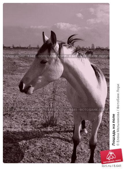 Лошадь на поле , фото № 8641, снято 16 апреля 2006 г. (c) Елена Мельникова / Фотобанк Лори