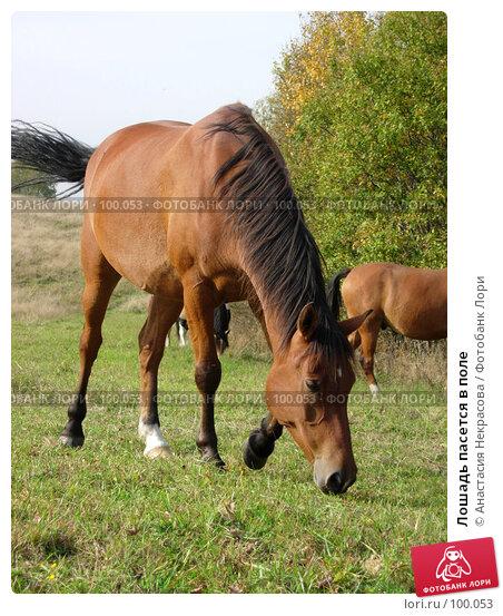 Лошадь пасется в поле, фото № 100053, снято 26 сентября 2007 г. (c) Анастасия Некрасова / Фотобанк Лори