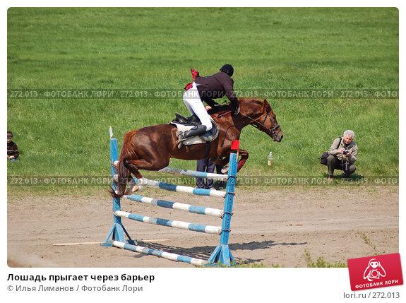 Лошадь прыгает через барьер, фото № 272013, снято 1 мая 2006 г. (c) Илья Лиманов / Фотобанк Лори