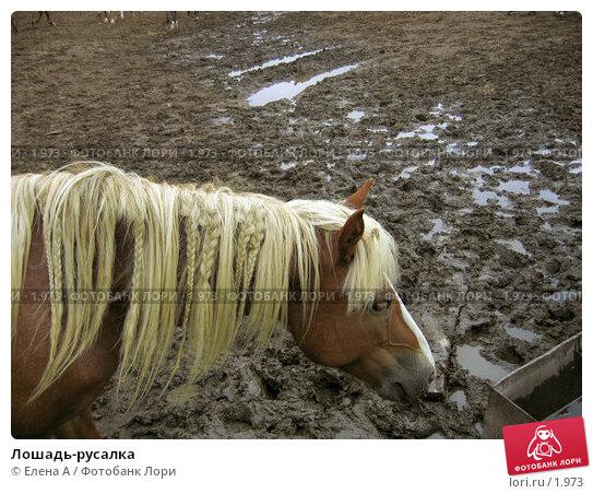 Купить «Лошадь-русалка», фото № 1973, снято 8 февраля 2003 г. (c) Елена А / Фотобанк Лори
