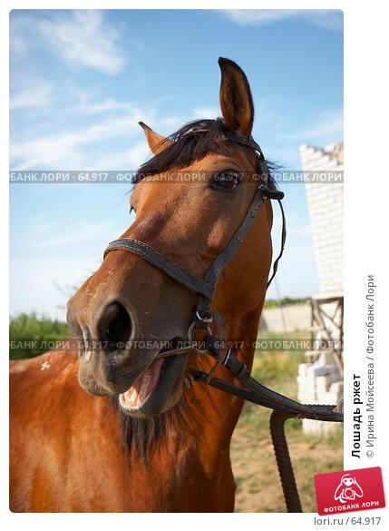 Лошадь ржет, эксклюзивное фото № 64917, снято 17 июня 2007 г. (c) Ирина Мойсеева / Фотобанк Лори