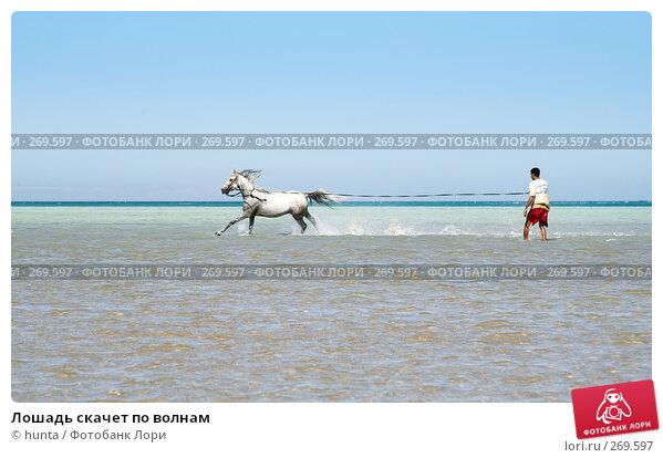 Лошадь скачет по волнам, фото № 269597, снято 16 сентября 2007 г. (c) hunta / Фотобанк Лори