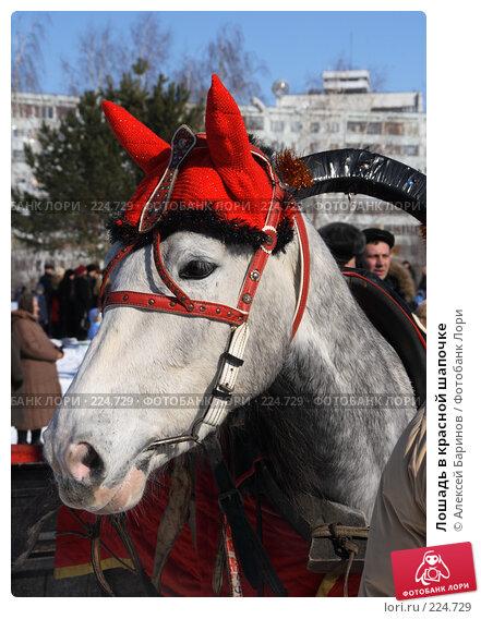 Купить «Лошадь в красной шапочке», фото № 224729, снято 9 марта 2008 г. (c) Алексей Баринов / Фотобанк Лори
