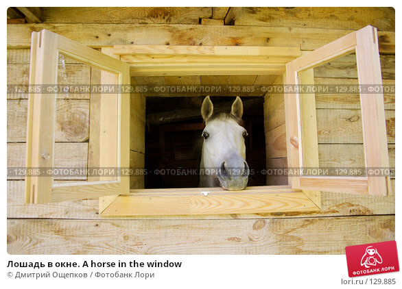 Лошадь в окне. A horse in the window, фото № 129885, снято 1 июля 2007 г. (c) Дмитрий Ощепков / Фотобанк Лори