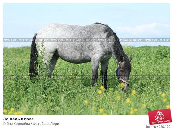 Купить «Лошадь в поле», фото № 920129, снято 14 июня 2009 г. (c) Яна Королёва / Фотобанк Лори