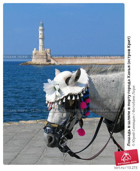 Лошадь в шляпе в порту города Ханья (остров Крит), фото № 13273, снято 22 сентября 2006 г. (c) Юрий Синицын / Фотобанк Лори