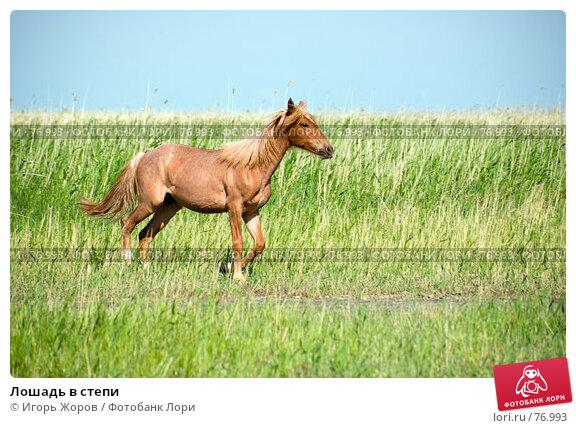 Лошадь в степи, фото № 76993, снято 16 июня 2007 г. (c) Игорь Жоров / Фотобанк Лори