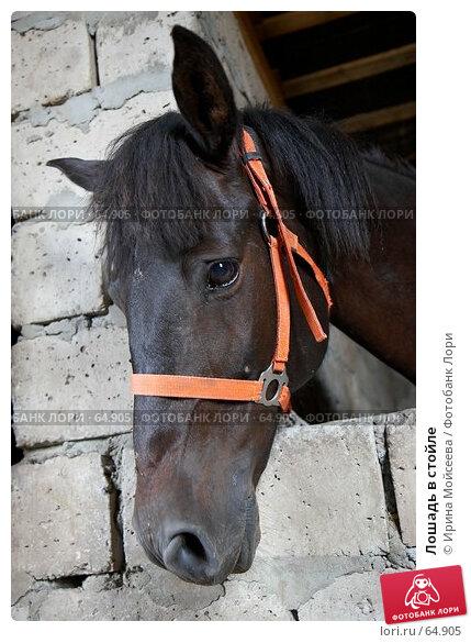 Купить «Лошадь в стойле», эксклюзивное фото № 64905, снято 17 июня 2007 г. (c) Ирина Мойсеева / Фотобанк Лори