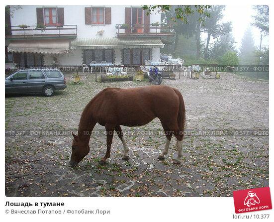 Лошадь в тумане, фото № 10377, снято 21 сентября 2005 г. (c) Вячеслав Потапов / Фотобанк Лори