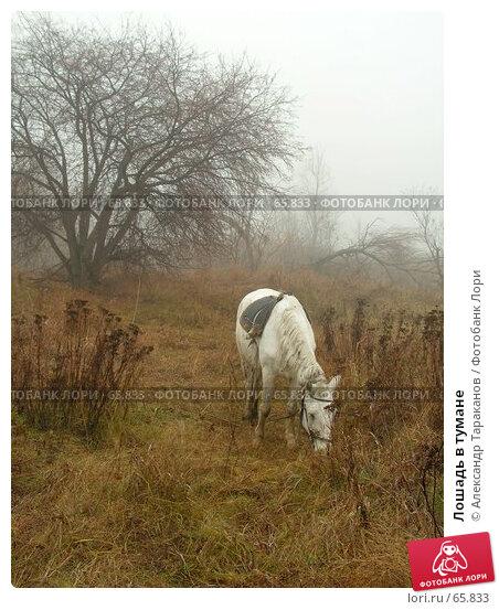 Лошадь в тумане, эксклюзивное фото № 65833, снято 26 февраля 2017 г. (c) Александр Тараканов / Фотобанк Лори