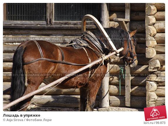 Лошадь в упряжке, фото № 99873, снято 24 марта 2007 г. (c) Asja Sirova / Фотобанк Лори