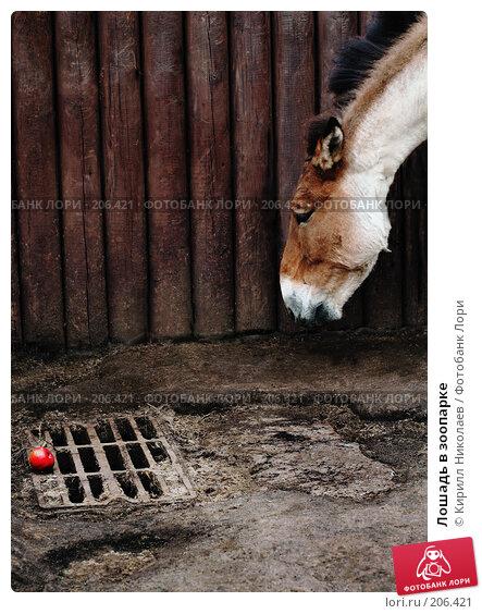 Лошадь в зоопарке, фото № 206421, снято 3 июня 2006 г. (c) Кирилл Николаев / Фотобанк Лори