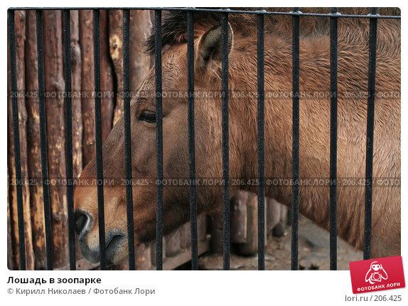 Купить «Лошадь в зоопарке», фото № 206425, снято 14 апреля 2006 г. (c) Кирилл Николаев / Фотобанк Лори